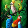Tropical birds and parrots in a rainforest. Illustration d'oiseau tropicaux et de perroquets dans une forêt tropicale.