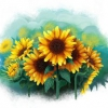 Sunflower illustration. Illustration de fleurs de tournesol.